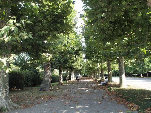 新宿御苑プラタナスの並木