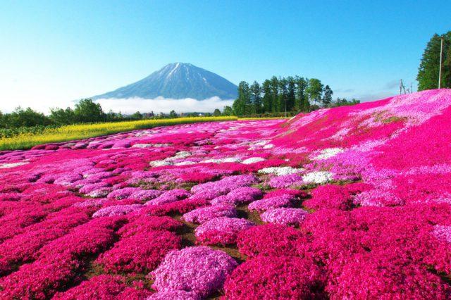 季節の花畑を見に行く