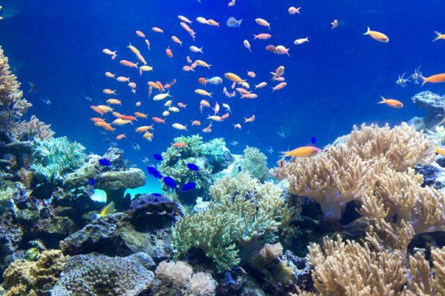 水族館でお魚たちに癒される