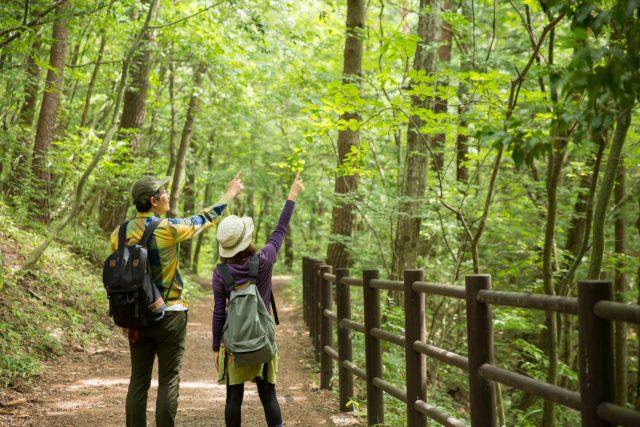 自然の中をハイキング